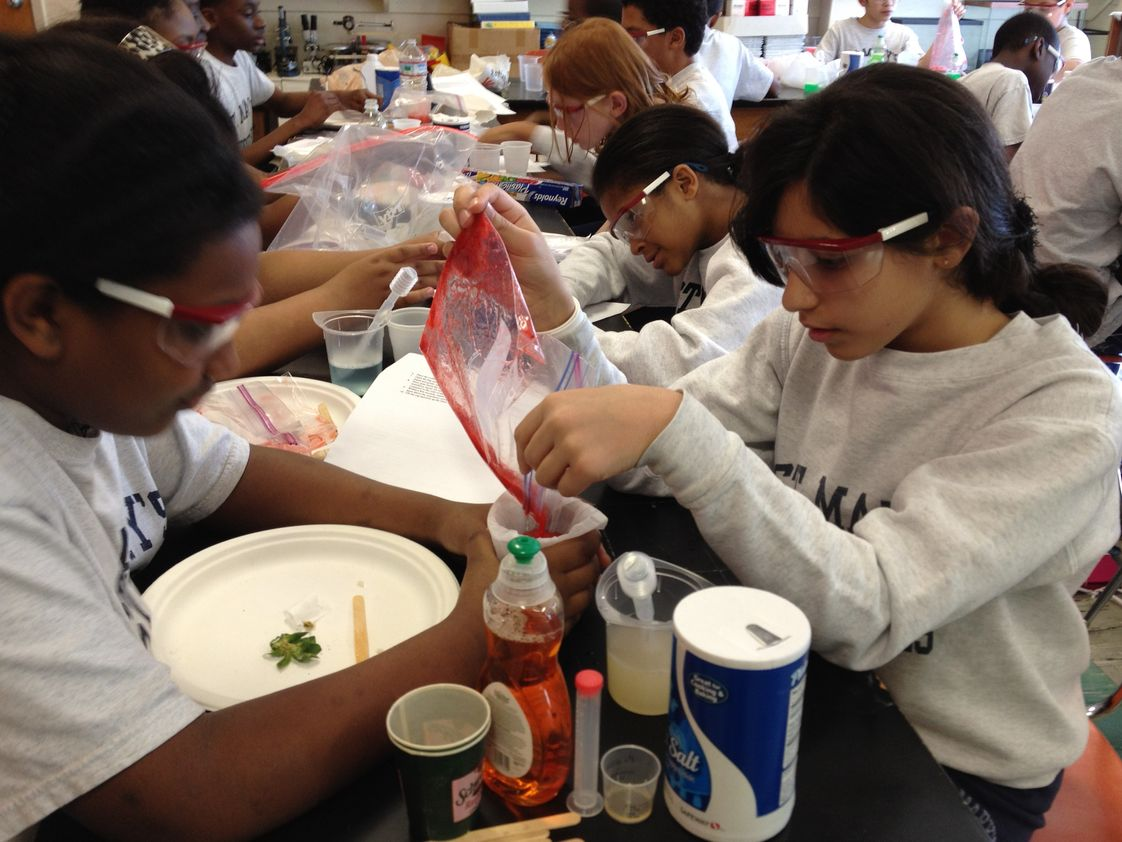 St. Mary's School Photo #1 - Discovering DNA with strawberries