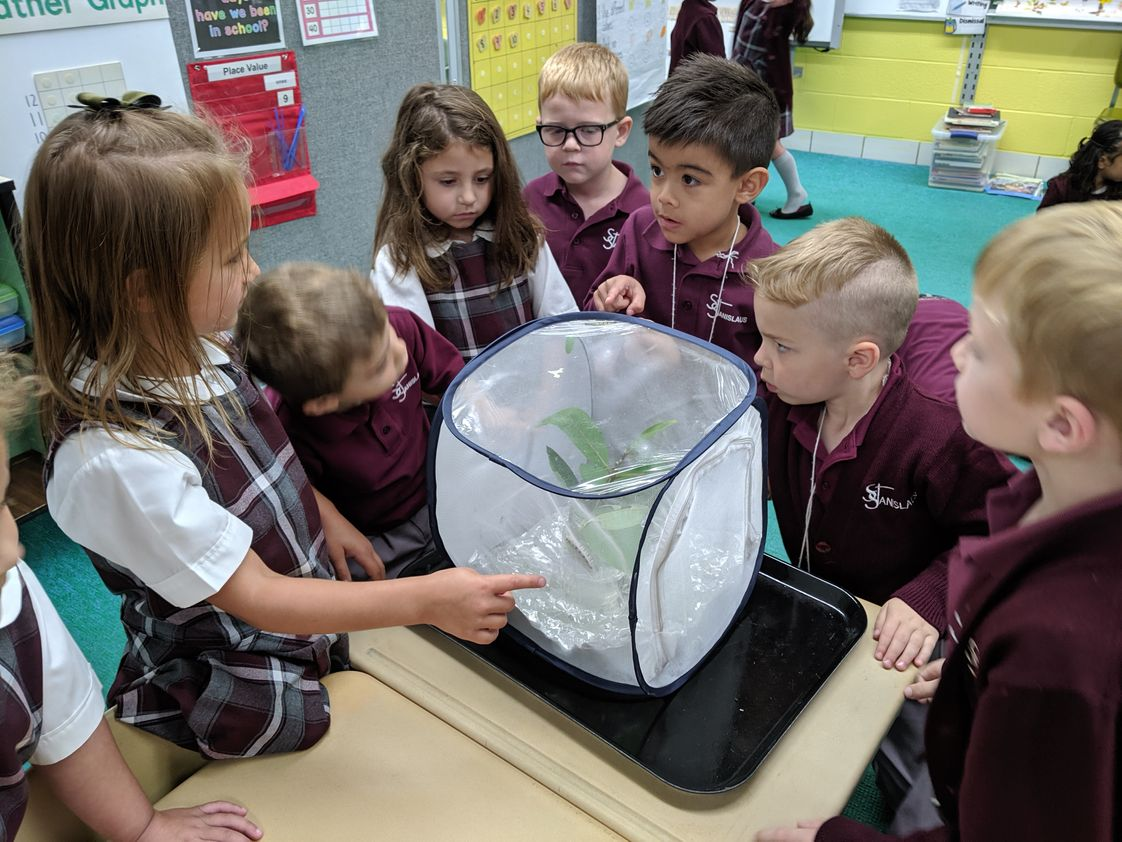 St Stanislaus Elementary School Photo #1 - Kindergarten Science Lesson on the life cycle of butterflies