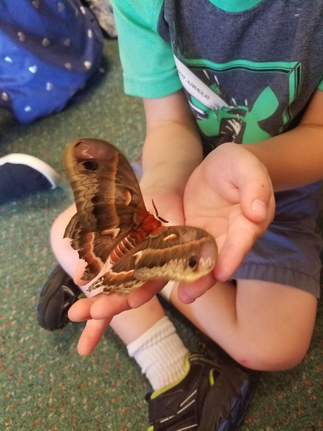 Little Voyageurs' Montessori School Photo - Bruce the Bug Guy, comes to visit LVMS.