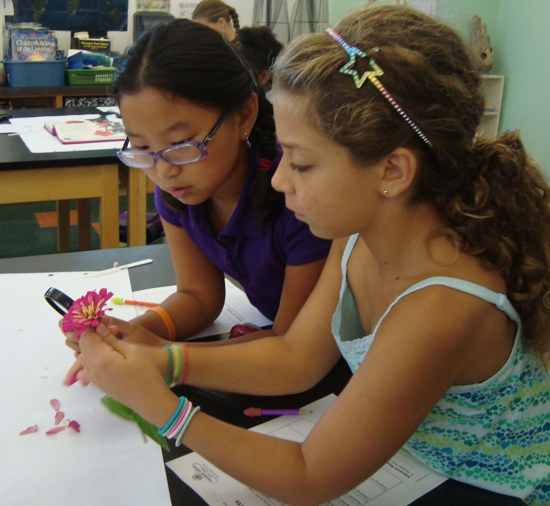 Friends School Mullica Hill Photo - At Friends School Mullica Hill we value hands-on learning. We have two science labs; here are two students disecting a flower in one of our labs.