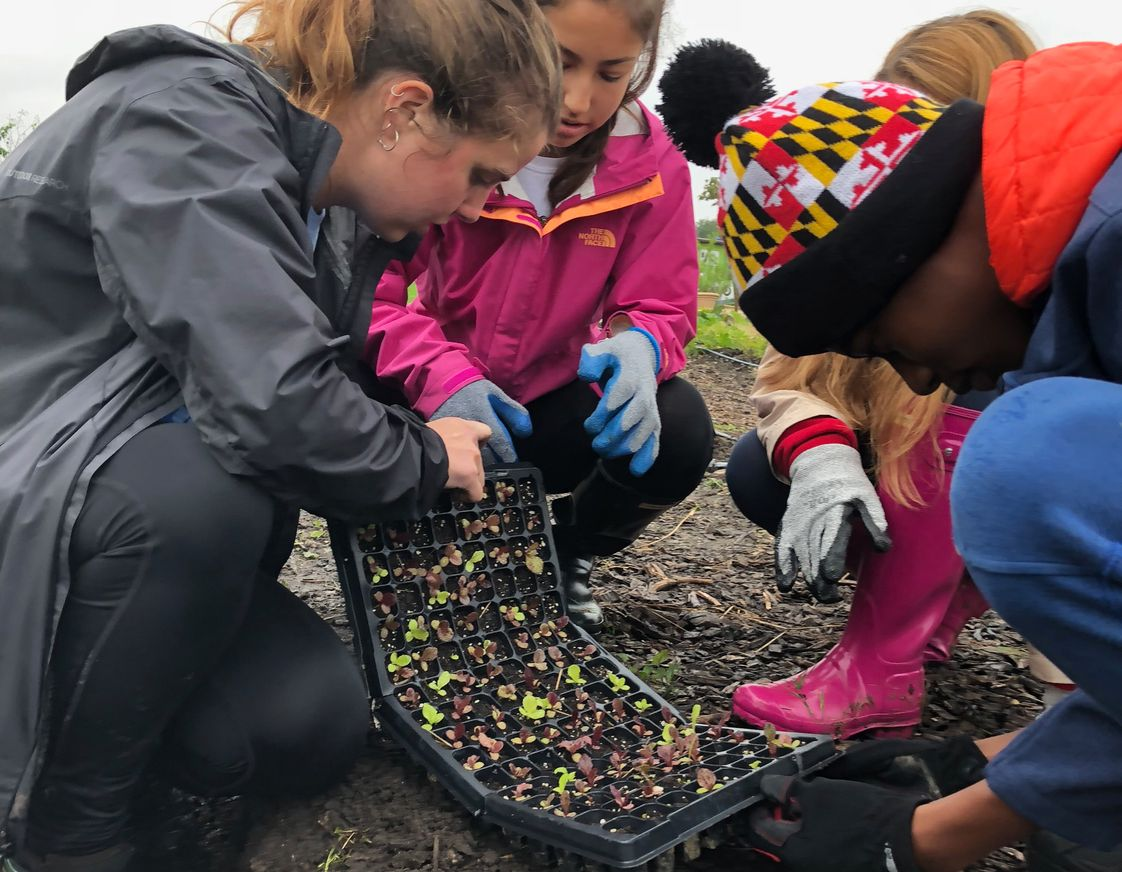 Greenspring Montessori School Photo - Service and stewardship is a major part of the Montessori curriculum. Here, Adolescents volunteer at RealFood Farm in Baltimore to plant seedlings.