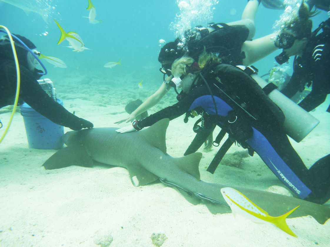 Admiral Farragut Academy Photo - Starting in 9th grade students may take Scuba Diving.