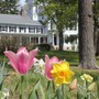 Soundview Preparatory School Photo #7 - Soundview's Main House in spring