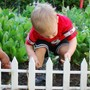 Hudson Montessori School Photo - Children's House gardening