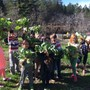 Live Oak Waldorf School Photo #5 - 1st-graders harvesting cabbage from the school garden.