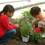 Montessori Of Brea Photo #3 - Kindergarten children working in the garden.