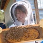 St Andrew's School Photo #4 - Working at the Lower School bee hive